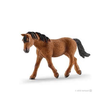 Bashkir Curly kobila