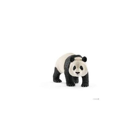 Velika panda, muzijak